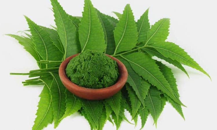Neem Helps in the Treatment of Malaria