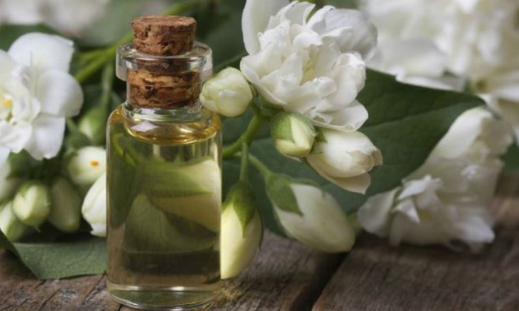 6 Proven Benefits of Jasmine Hair Oil for your Hair